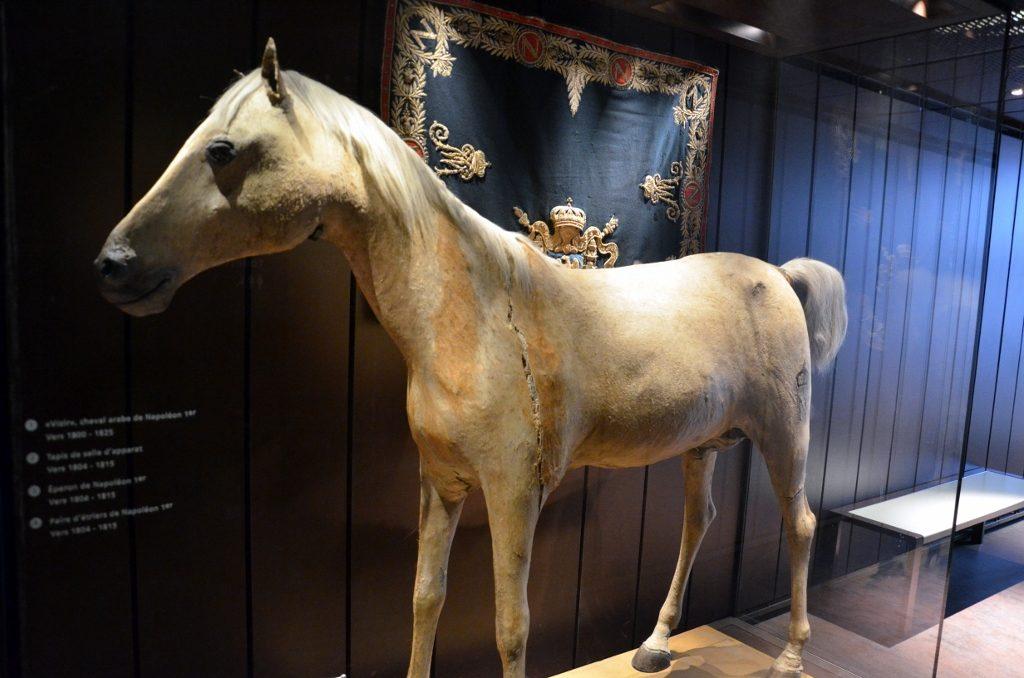 Het paard Vizir