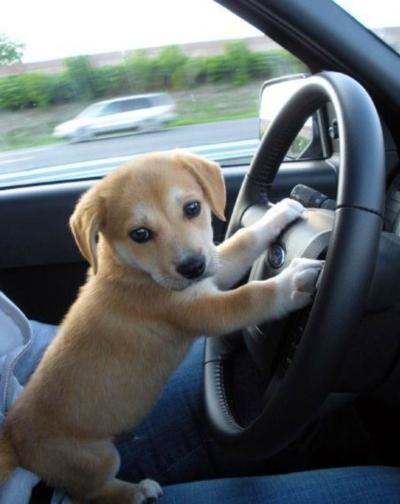 Hond veilig meenemen op autovakantie